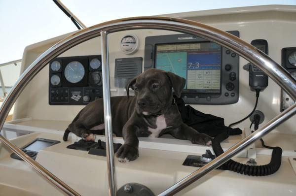 Boats for Sale & Yachts Eagle Transpacific Eagle 2006 Fishing Boats for Sale